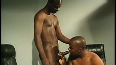 Cum-drinking young stud shoves his black prick in his friend's mouth